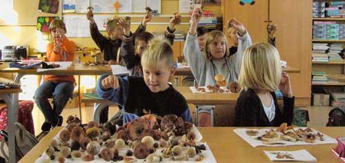Pilzkunde in der Schule