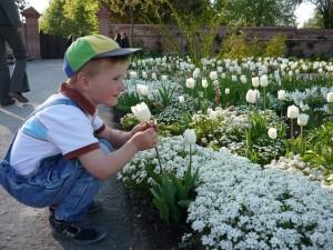 Ein kleiner Junge bewundert diese Tulpen.