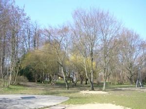 Frühlingserwachen am 02. April 2009 in Wismar