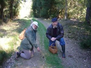 Nach kurzer Wegstrecke wurden unsere Pilzfreunde Leselotte und Axel auch gleich fündig. Eine kleine Frühjahrslorchel (Gyromitra esculenta) mitten auf dem Weg.