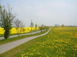 Der Raps und der Löwenzahn blühen jetzt in Mecklenburg um die Wette. Die Aufnahme entstand heute Mittag zwischen Boiensdorf und Pepelow an der Ostssee.