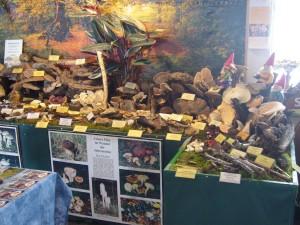 Die Pilzausstellung am 01. Mai 2009.