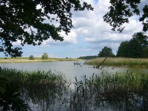 Aus dem Wasser herausragende Baumruinen zeugen noch von trockneren Zeiten. Möglicherweise verlief hier früher ein Landweg.