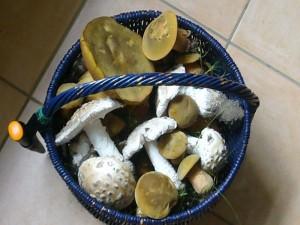 Vereinsfreund Peter Kofahl brachte mir heute diesen Korb voller Pilze für unsere Ausstellung. 04. Juli 2009.