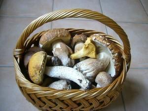 Vor einigen Tagen gesammelte Pilze für die Ausstellung, im Kühlschrank aufbewahrt.