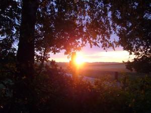 Abendstimmung gestern kurz vor Sonnenuntergang am Waldrand bei Klein Warin.