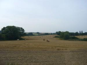 Dank der trockenen Witterung der letzten Zeit, ist das Getreide in Mecklenburg - Vorpommern fast vom Halm. Ein Hauch von Herbst schleicht sich allmählich ein. Foto: Feld bei Brüel am 10. August 2009.