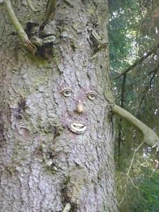 Und erwiederte mit finsterem Blick: Schert euch aus meinem Wald und lasst mir meine Pilze, ich brauche Sie zum Leben!