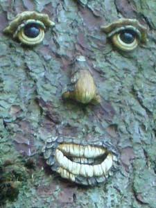 Wer auch immer diesem stolzen Baum ein Gesicht verlieh, auf jeden Fall war es für uns heute einen eindrucksvolle Überaschung und entschädigung für so wenig Pilze. Es lohnt sich, einige Bäume mal etwas näher an zu schauen.