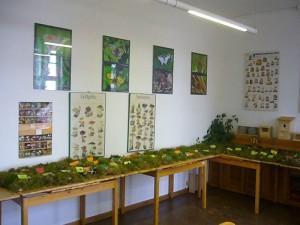Auf Grund der Trockenheit gelangte nur 51 Pilzarten zur Ausstellung.