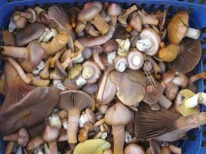 Das ist für unsere Pilzsuppe.