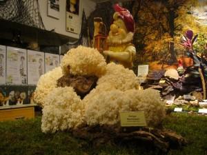 Unser Pilz - Gartenzwerg erwartet die Besucher. 24.09.2009.