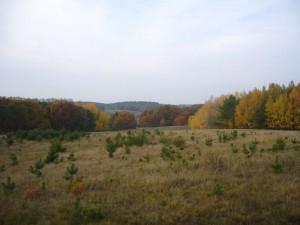Goldene Oktoberlandschaft bei Jülchendorf am 31.10.2009.