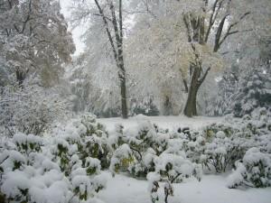 Der Lindengarten in Wismar um 15.52 Uhr. So winterlich verschneit präsentierte er sich nicht einmal im ganzen, letzten Winter. Der Pappschnee verwandelte alles in ein Wintermärchen. 04.11.2009.