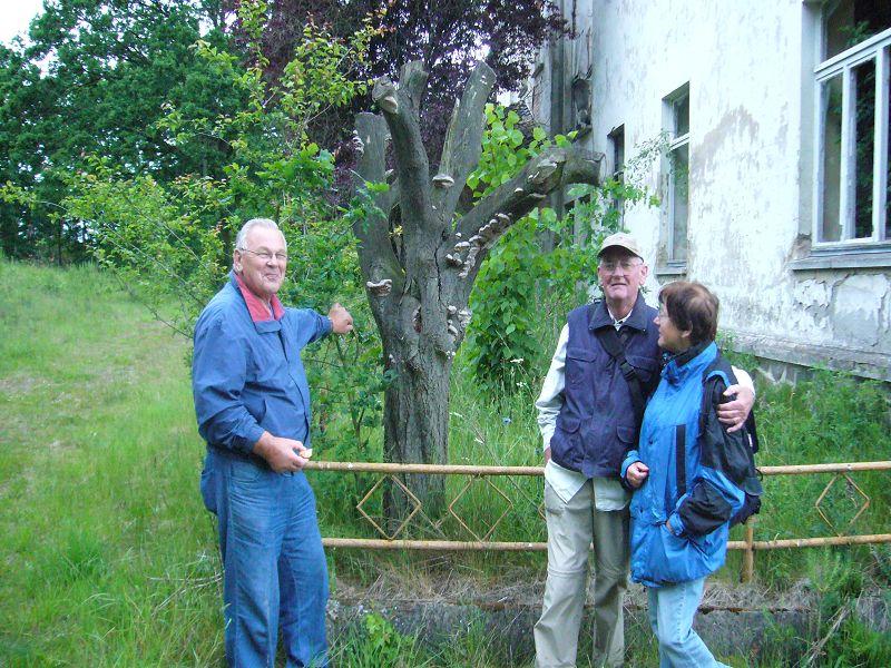 Öffentliche Pilzwanderung am 30. Mai 2009 bei Trams. Hier an einem alten Obstbaum mit Plaumen - Feuerschwamm.