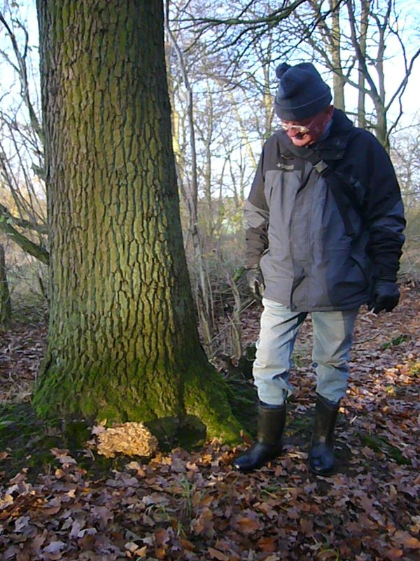 Ulrich Bardet entdeckt am Fuß einer Eiche einen schon etwas betagten Klapperschwamm. Öffentliche Pilzwanderung am 21. November 2009 am Drispether Moor.