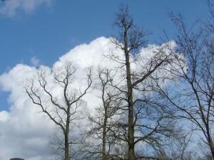 Noch sind die Laubbäume kahl, die Luft ist meist noch frisch und dicke Quellwolken, wie hier am Ostersonntag, bringen mitunter kräftige Schauer. Typisches Aprilwetter. Foto 04. April 2010 in Schwerin.