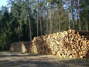 So wie hier im Sültener Forst türmen sich längst der Waldwege uberall riesige Berge an Holz. So mancher Pilzsammler wird sein Revier im Sommer oder Herbst kaum wieder erkennen!. Foto am 07. April 2010 im Sültener Forst.