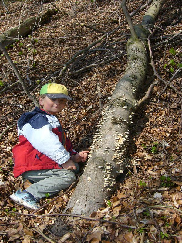 Der jüngste Pilzfreund Jonas hat einen Stamm mit angebrannten Rauchporlingen gefunden. 25.04.2010.