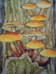 Samptfuß - Winterpilz (Flammulina velutipes)
