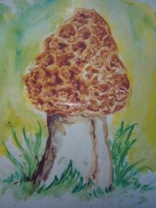 Dickfuß - Morchel (Morchella esculenta var. crassipes)