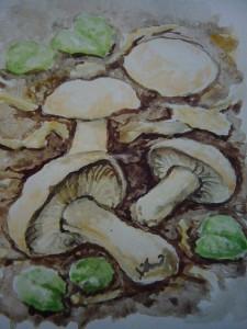 Maipilz (Calocybe ganbosa). Aquarell von Josef Gast.