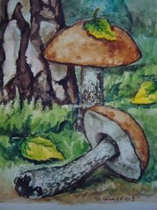 Birken - Rotkappe (Leccinum testaceoscabrum)