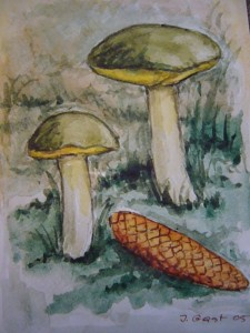Ziegenlippe (Xerocomus subtomentosus)