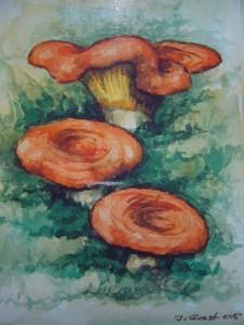 Edel - Reizker (Lactarius deliciosus)