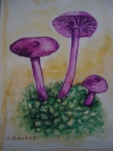 Violetter Lacktrichterling (Laccaria ametystea)