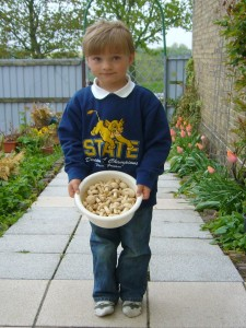Sohn Jonas präsentiert voller Stolz seine Maipilze, die er gestern mit der Mama in Schwerin voller Begeisterung erntete. 08. Mai 2010.