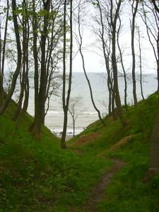 Und noch ein letzter Bilck die Steilküste herunter dann endet die wohl erlebnissreichste Frühlingspilzwanderung, die wir jeh gemacht haben.