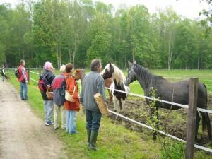 In Eggerstorf gibt es auch einen Reiterhof. Wir begnügten uns aber den Pferden einen schönen Tag zu wünschen. 22. Mai 2010.