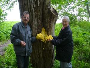 Und so kamen Hans Jürgen und Helga doch noch zu einer Pilzmahlzeit.