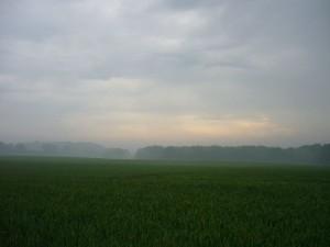 Heute morgen gegen 07.00 Uhr zog es sich nach nächtlichen Auflockerungen, wieder zu und find an zu regenen. Es handelt sich um die Reste nächtlicher Gewitter. Der Dunst berät die extrem hohe Luftfeuchtigkeit. Ideales Pilzwetter! 10. Juni 2010