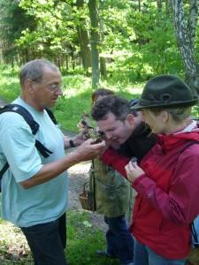 Es ging aber auch noch viel kleiner. An so manchem Holzknüppel befinden sich oft sehr zahlreich winzigste Arten, oft Ascomyceten, die oft nur mit einer Lupe wahrgenommen werden können.