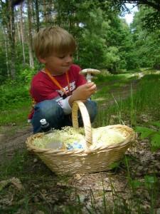 Da freut sich Jonas - endlich auch ein Pilz! Was mag das wohl für einer sein. Papa wird es sicher Wissen, dachte er. Es ist ein Grauer wulstling im Doppelpack. Den kann man sogar essen