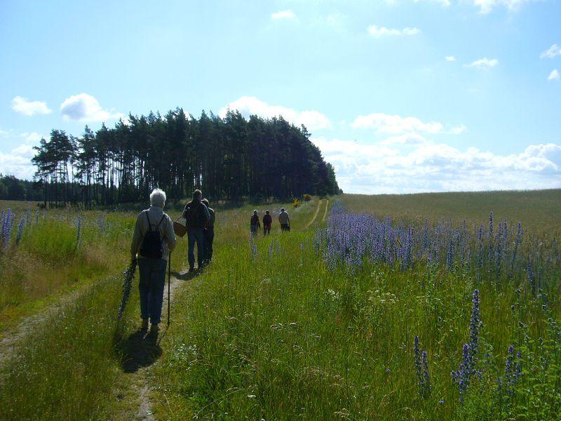 Abwechslungsreich verläuft der Weg durch teils blühende Landschaften im Nordwesten Mecklenburgs. 26. Juni 2010.