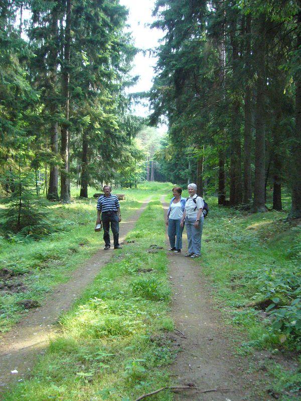 Wunderschöne Waldbereiche in denen bei günstige Bedingungen sicher die schönsten Pilze zu finden sind. 10. Juli 2010.