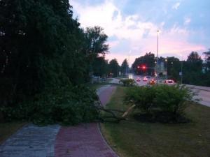 Heftig waren nicht nur die Niederschläge, sonder auch die die stark böigen Fallwinde der Gewitterwolken. Gehwege, so wie hier im Wismarer Stadtteil Wendorf waren stellenweise blockiert durch umgestürzt Bäume, Äste und Zweige. 12. Juli 2010.