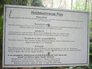 Einige wichtige Fakten zum Thema Holzbewohnende Pilze.