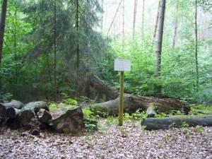 Gezielt und ausgesucht wurden hier Holzstämme der unterschiedlichsten Baumarten abgelagert. Hier kann man die Vorlieben bestimmter Pilzarten für eine ganz bestimmte Holzart beobachten. Eine sehr gute Idee!