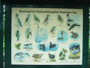 in unmittelbarer Nähe liegt auch das Naturschutzgebiet Peetscher See, ein stark der Verlandung ausgesetzter Flachwassersee, der vor allem für viele Vogelarten von großer Bedeutung ist.