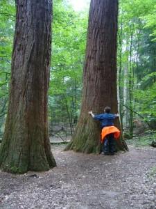 Die Bäume sind noch jung, aber trotzden schon irgendwie monumental. Sie sollen bis zu 4000 Jahre alt werden. Wir schauen dann später noch mal vorbei!