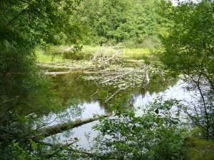 Immer noch ragen die Äster der abgestürzten Bäume aus dem Wasser. Genau hier verlief ein breiter Fahrweg, der bis heute unterbrochen ist.