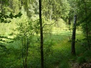 Zwischem den Schwarzen und dem Langen See befindet sich auch ein interessantes Kesselmoor.