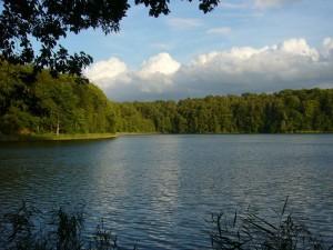 Der Deichelsee ist ein tief in die Landschaft eingesenkter, klarer Waldsee bei Brüel. Seine bewaldeten Hangterassen sind kalkhaltig und an der links im Bild erkennbaren, besonnten Nordseite ist eines der wenigen, bekannten Fundorte des sehr seltenen Satans - Röhrlings in Norddeutschland. 25. August 2010.