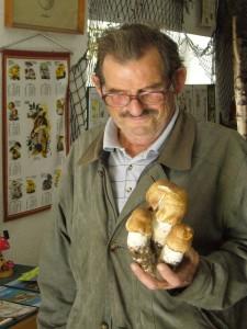 Einen wirklich schönen Fund machte heute eher zufällig unser Pilzfreund Hans - Jürgen Wilsch. Am Strassenrand hier in Wismar entdeckte er diesen wunderschönen Drilling vom Riesen - Champignon ( Agaricus augustus). Viel zu schade zum Aufessen, drarum bereichern sie jetzt unsere Pilzausstellung. 31. August 2010.