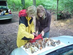 """Für den Laien unklare Pilzarten wurden zur Durchsicht aus den Sammelbehältnissen """"gefischt"""". Mal sehen, was der Fachmann dazu sagt.l"""