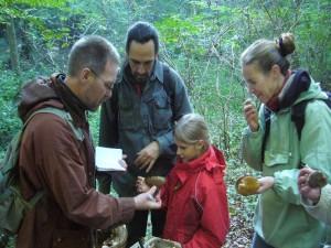 Links im Bild sehen wir Herrn Dr. Norbert Amelang aus Greiswald bei Erläuterungen zum Hasenstäubling. Dr. Amelang ist der Vorsitzende der Arbeitsgemeinschaft Mykologie im Naturschutzbund des Landes Mecklenburg - Vorpommerns. 10.10.2010.